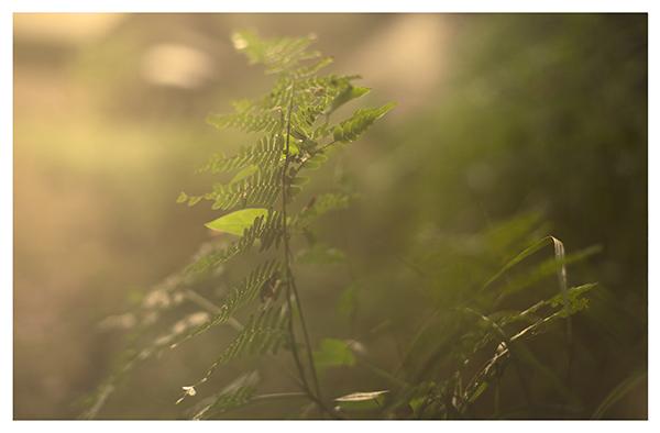 fotograf warszawa, fotografia warszawa, fotografia podróżnicza, fotograf rodzinny, fotografia rodzinna, sesja plenerowa, sesja zdjęciowa warszawa, sesja zdjęciowa w plenerze, sesja w plenerze, sesja w plenerze warszawa